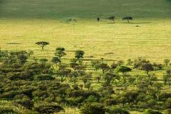Serengeti nationaal park, safari, Tanzania, Afrika Royalty-vrije Stock Fotografie