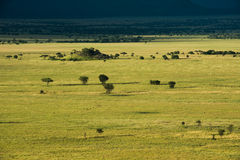 Serengeti nationaal park, safari, Tanzania, Afrika Royalty-vrije Stock Afbeelding