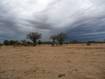 Serengeti National Park Stock Photo