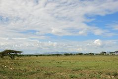 Serengeti national park scenery, Tanzania, Africa Stock Images