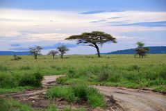 Serengeti national park scenery, Tanzania, Africa Stock Photo