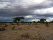 Serengeti National Park Tanzania, Africa Stock Photography