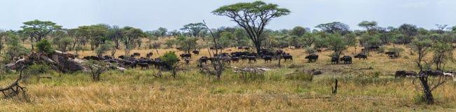 Serengeti-Panorama stockfotografie