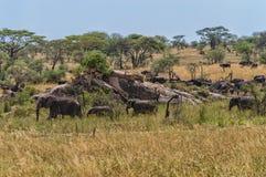 Serengeti-Panorama stockfoto