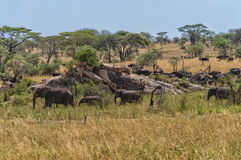 Serengeti Panorama Stock Photo
