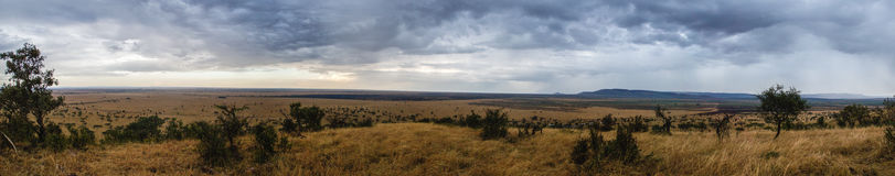 Serengeti Panorama Royalty Free Stock Photo