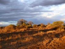 Serengeti park narodowy Obrazy Stock