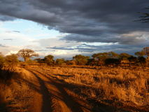 Serengeti park narodowy Zdjęcie Royalty Free