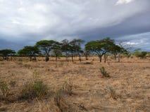 Serengeti park narodowy Zdjęcia Stock