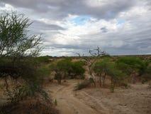 Serengeti park narodowy Fotografia Royalty Free