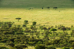 Serengeti park narodowy, safari, Tanzania, Africa Fotografia Royalty Free