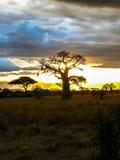 Serengeti park narodowy Tanzania, Afryka Zdjęcie Royalty Free