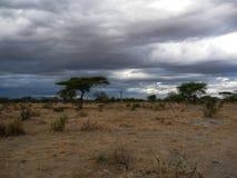 Serengeti park narodowy Tanzania, Afryka Fotografia Stock