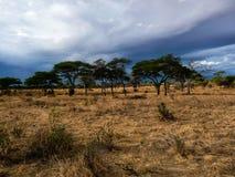 Serengeti park narodowy Tanzania, Afryka Obrazy Stock