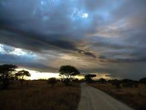 Serengeti park narodowy Tanzania, Afryka Zdjęcia Stock
