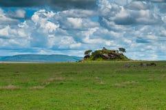 Serengeti park narodowy, Tanzania, Afryka Zdjęcie Royalty Free