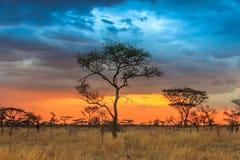 Serengeti park narodowy w północnym zachodzie Tanzania obraz royalty free