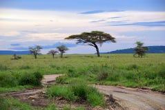 Serengeti parka narodowego sceneria, Tanzania, Afryka Zdjęcie Stock