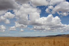 Serengeti Plains Royalty Free Stock Photos
