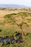 Serengeti plains. An aerial photograph of the Seronera region of the Serengeti Stock Photography
