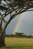 Serengeti Rainbow Stock Image
