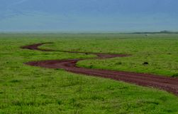 Serengeti. Road earth african in the serengeti stock image
