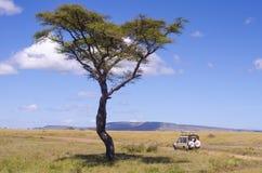 Serengeti safari royaltyfria bilder