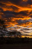 Serengeti - Safarilagerdämmerung stockbilder
