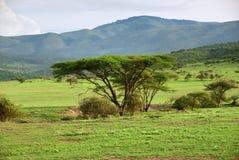 Serengeti scenry, Tanzânia, África fotos de stock