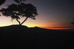 Serengeti-Sonnenaufgang-Schattenbild Stockbild