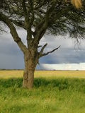 Serengeti Tansania Lizenzfreies Stockbild