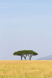 Serengeti trees Stock Photo