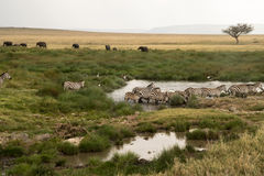 Serengeti Watering Hole Royalty Free Stock Photography
