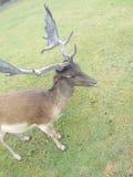 Serengetie公园霍登哈根 免版税库存照片