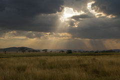 Serengetizonnestraal stock foto's