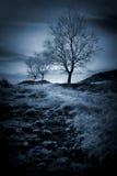 Serenidad Fotografía de archivo libre de regalías