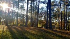 Serenidad de maderas fotografía de archivo libre de regalías