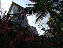 Serenidad del amanecer del verano fotografía de archivo libre de regalías