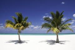 Serenidad tropical - palmeras gemelas Imagen de archivo