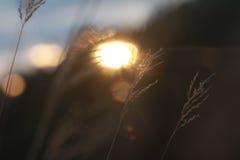 Serenidade Fotografia de Stock Royalty Free