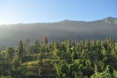 Serenidade da manhã na montanha de Bromo Foto de Stock Royalty Free