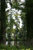 Serenidade do pântano. Imagem de Stock