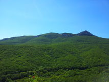 Serenità della foresta immagini stock