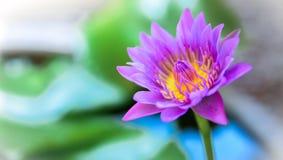 Sereniteit en schoonheid Stock Fotografie