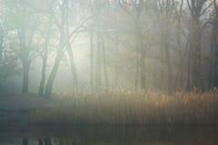 Serenitet av morgonen Arkivbilder