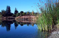 Serenity. Perc Ponds near the San Francisco Bay royalty free stock photography
