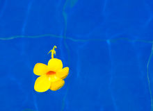 Serenity. A yellow blossom floats on blue water Royalty Free Stock Photos