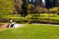 Serenity. Serene landscape - bench and pond in Seattle Arboretum, Washington, USA Stock Photography