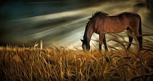 serenity fältet betar hästen royaltyfri illustrationer