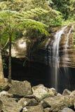 Serenity Falls in Buderim. Serenity Falls in Buderim, Sunshine Coast, Australia. Located in the Buderim Forest waterfall walk Stock Image